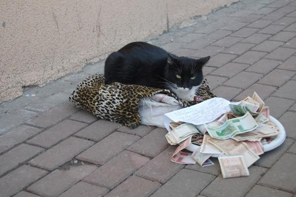 beggingcats