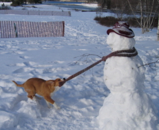 Quincy_with_Snowman