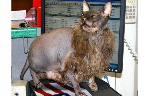 Cat Ugly Bat Boy