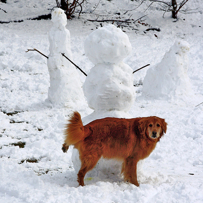 dog-peeing-on-snowman