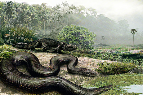 giant snake pictures big Top 10 Nat Geo Discoveries of 2009