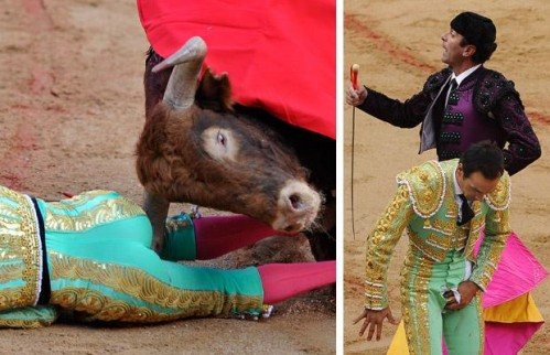 Matador gored in the crotch