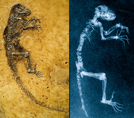 missing link found big Top 10 Nat Geo Discoveries of 2009