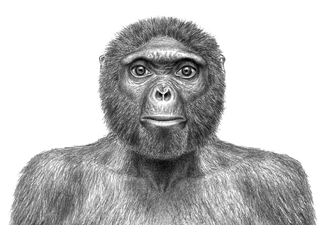 oldest-human-skeleton-ardi-missing-link-chimps-ardipithecus-ramidus_big