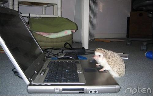 Cute Hedgehog Photos