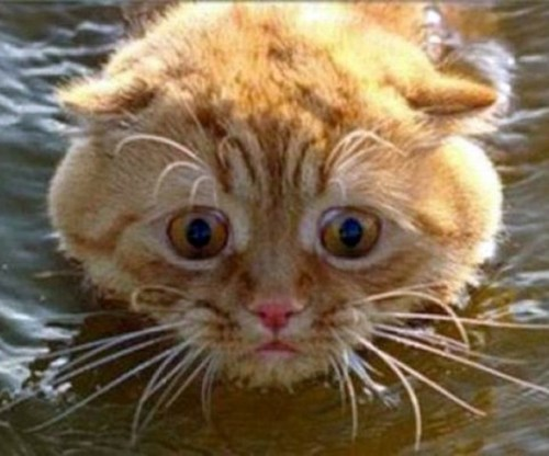 wetcat01 500x416 40 Funny Photos of Wet Cat