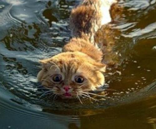 wetcat02 500x416 40 Funny Photos of Wet Cat