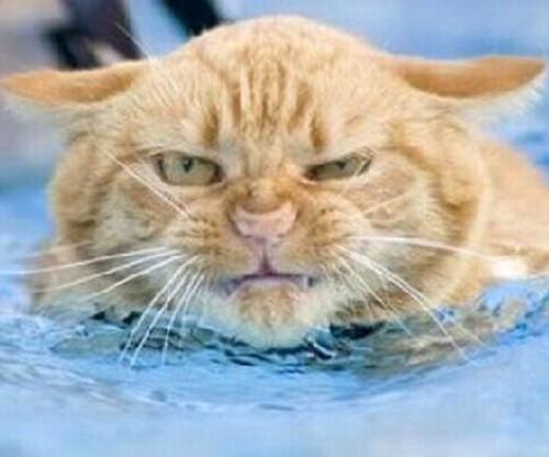 wetcat03 500x416 40 Funny Photos of Wet Cat