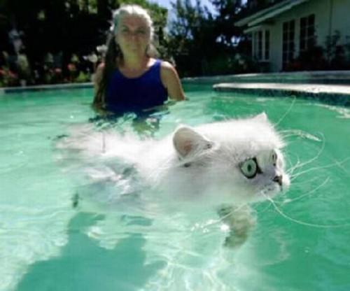 wetcat04 500x416 40 Funny Photos of Wet Cat