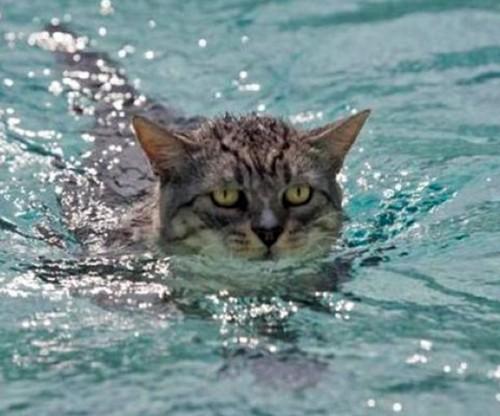 wetcat06 500x416 40 Funny Photos of Wet Cat