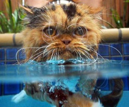 wetcat07 500x416 40 Funny Photos of Wet Cat