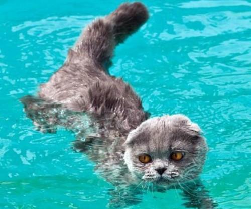 wetcat09 500x416 40 Funny Photos of Wet Cat