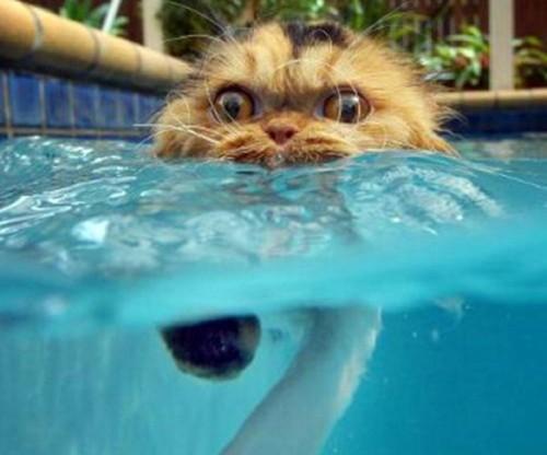 wetcat11 500x416 40 Funny Photos of Wet Cat