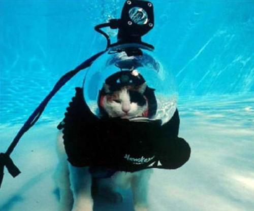 wetcat13 500x416 40 Funny Photos of Wet Cat