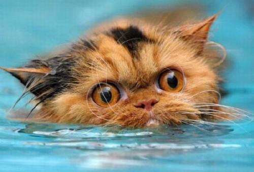 wetcat14 500x339 40 Funny Photos of Wet Cat
