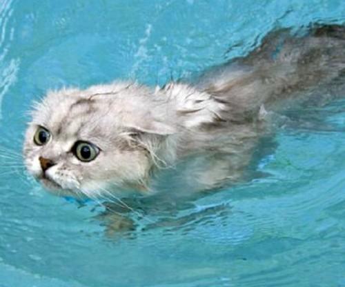 wetcat16 500x416 40 Funny Photos of Wet Cat