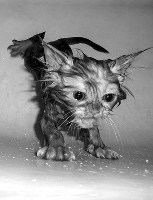 Funny Photos of Wet Cat