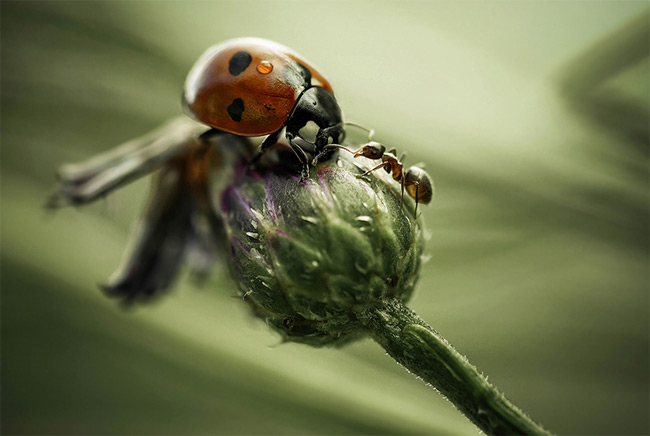 Stunning close-ups of Insects