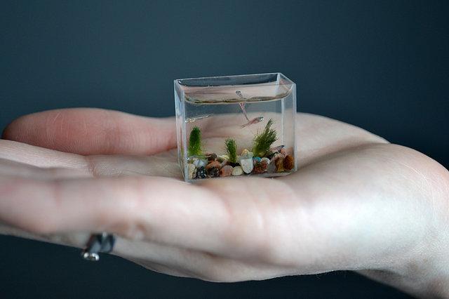 OHHH SHOT: The World's Smallest Aquarium
