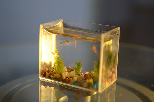 World's Smallest Aquarium