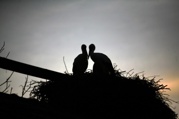 Malena & Klepetan - Love Story