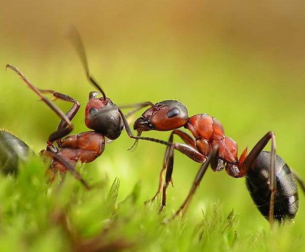 Stunning Macro Photos of Ants
