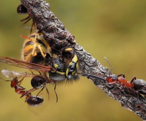 Stunning Macro Photos of Ants