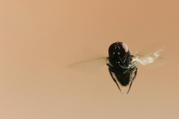 Insects Photos by Josip Cutunic