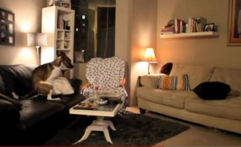 Dog and Pillowwwwsss - Funny Video