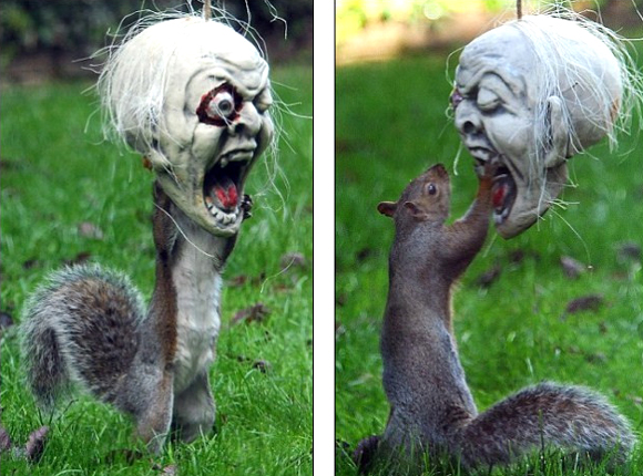 Squirrel vs. Halloween mask - Funny Photos