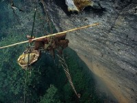Nepal's honey hunters on Himalayan cliff