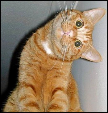 Amazing moments of funny cats
