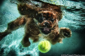 Funny Photos of Underwater Dogs