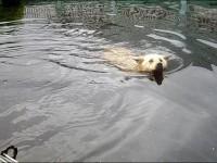 The incredibly loyal dog