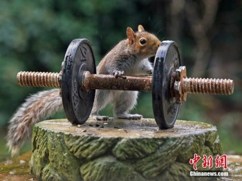 Squirrel Bodybuilder