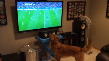 Sports loving dog watching the World Cup