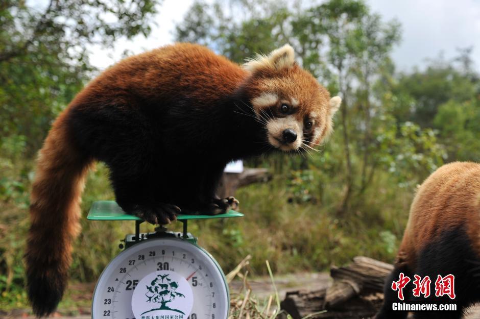 Funny photos of wild a...
