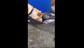 Amazing dog saves fish