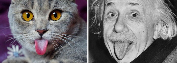 Cat looks like Albert Einstein
