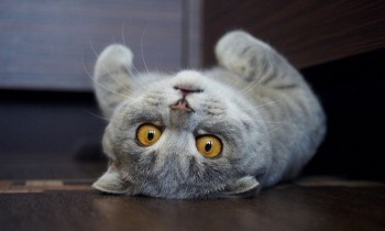 Cat looks like Albert Einstein