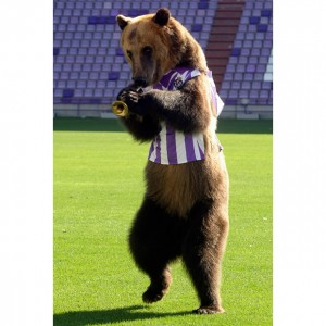 Bear visits the Real Valladolid soccer stadium