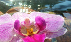 Orchid sunbathing