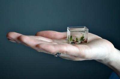 World's Smallest Aquarium