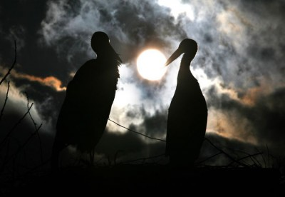 The Incredible Love Story Of Two Storks Malena And Klepetan