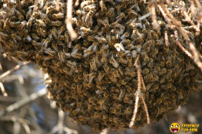 My new Neighbors - a Swarm of Bees