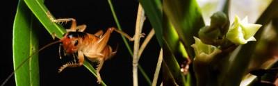 Top 10 New Species
