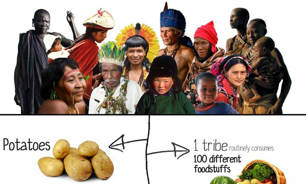 The Original Scientists - Tribal Peoples Contributions to Humanity [Infographic]
