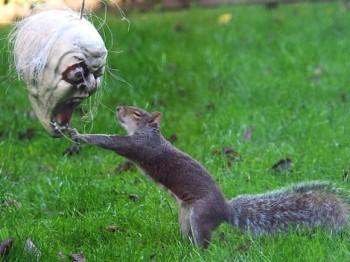 Squirrel vs. Halloween mask - Funny Photos