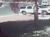Brave Cat Saves Young Boy from Dog Attack